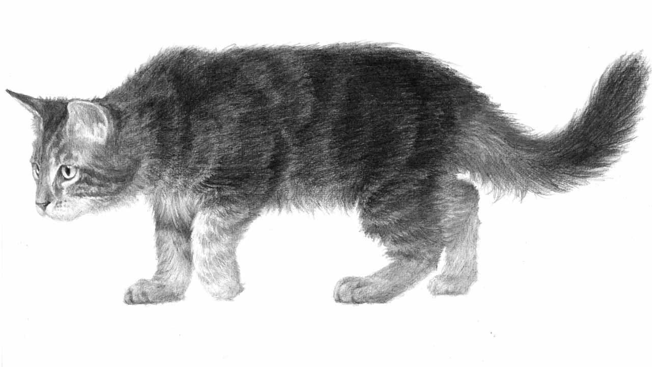 Картинки с кошками нарисованные 1 кошка стоит на 4 ногах легкие, танки картинки