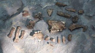 Раскопки некрополя