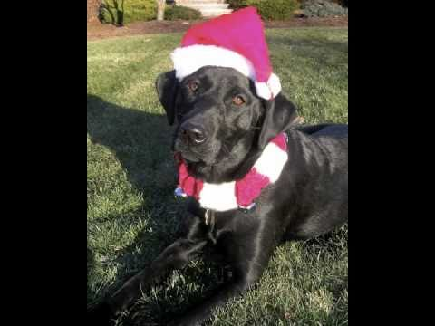 ★The 12 Dog Days of Christmas!★