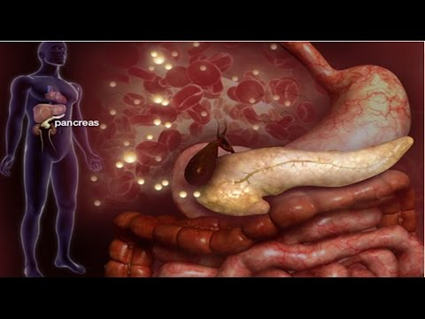 Imagens de anatomia do corpo humano