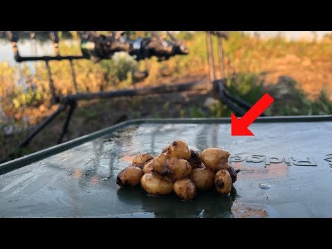 How To Catch Carp Using TIGER NUTS (Effective!)