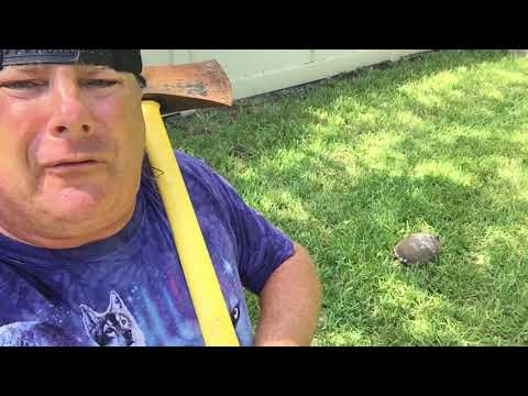 Donnie Baker Reacts to the Latest Racial Divide from Protesters with Turtles, Temper and Truth!