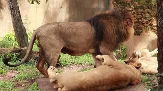Zoo park animals in Sri Lanka | Animal life 2019 | part 2