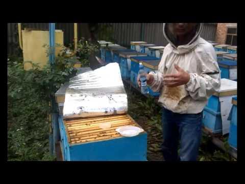 Применение муравьиной кислотой на пасеке