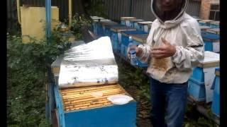 видео Муравьин: инструкция по применению и отзывы о препарате