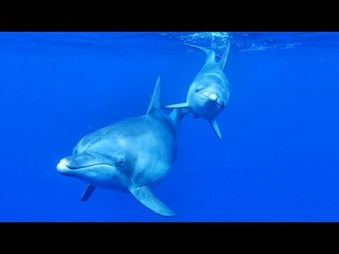 Georges Delerue - The Day of the Dolphin 【HD】