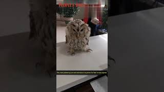 Video of a man carrying an owl on his shoulder in a police station goes viral