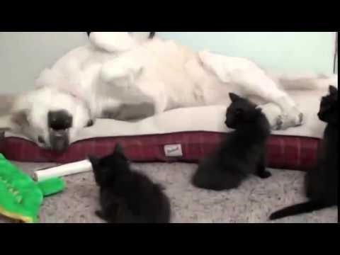 Gatti e cani divertenti youtube for Youtube cani e gatti