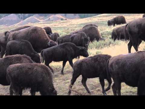 Wildlife Filmmaking 2 - Patience