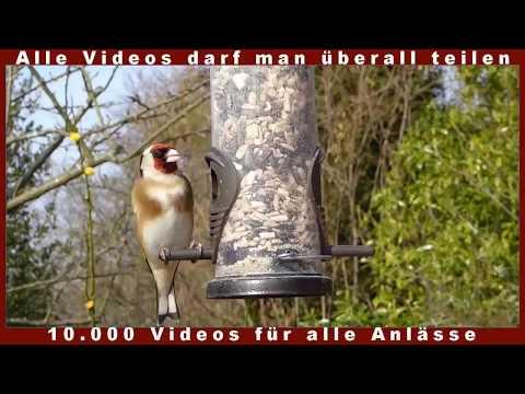 Frühlingsanfang Frühling Frühlingserwachen Frühlingsgefühle Lustige Videos Lachen gesund ansteckend