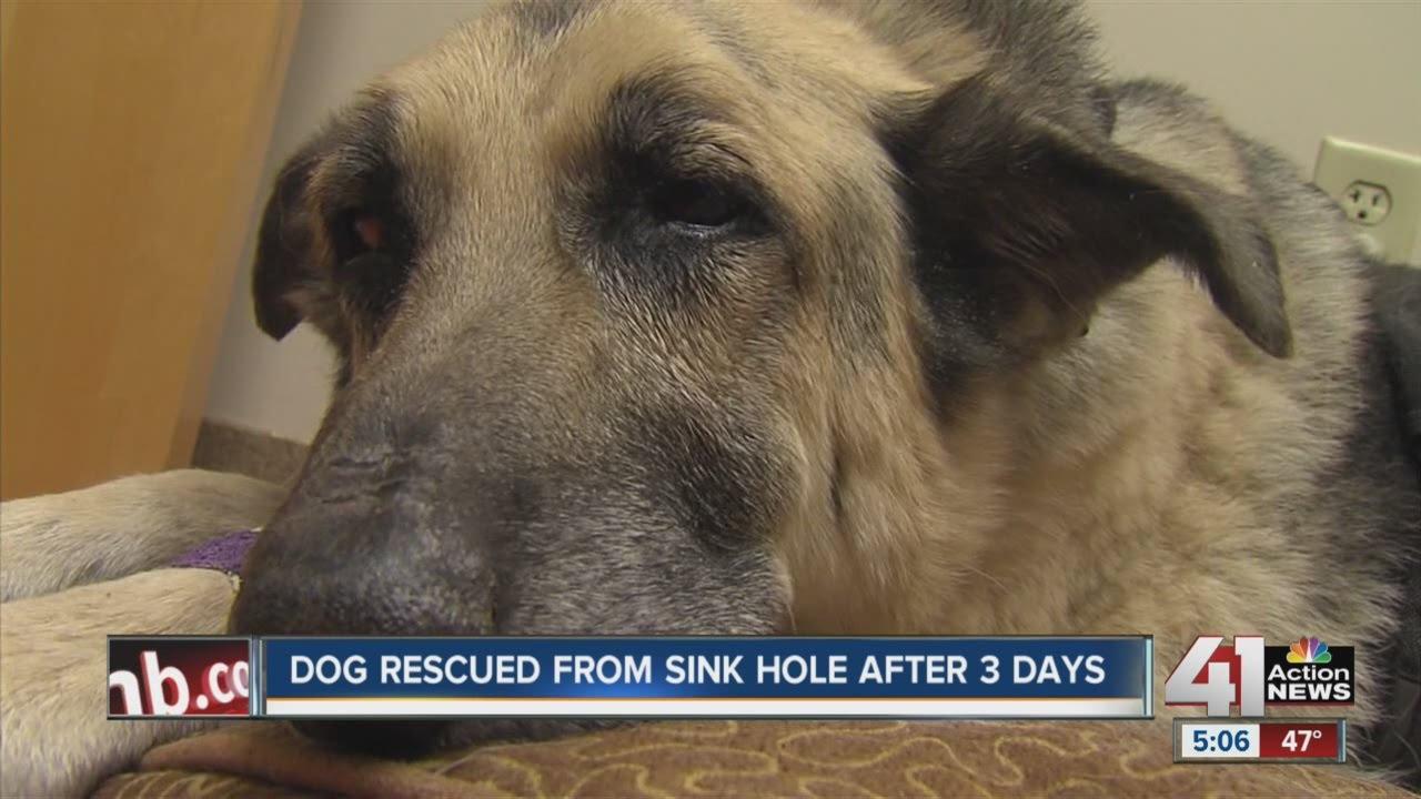 Este perro sobrevivi� 72 horas enterrado vivo, aullando para pedir ayuda