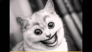 Смешной стих про кота