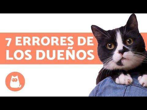 7 errores que cometen los dueños de gatos