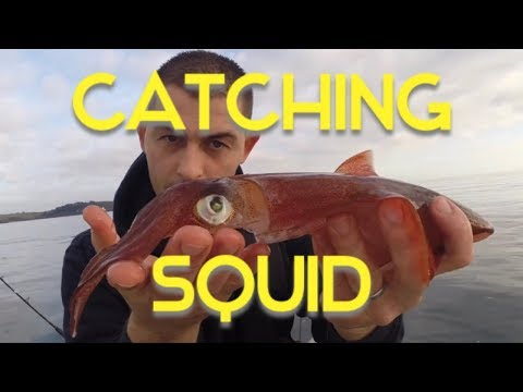 Squid Fishing - Squid Fishing For Beginners, Rigs, Tips And Tactics