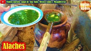 Asi se Comen los Ricos ALACHES 🌿 en la Mixteca Oaxaca 🍀