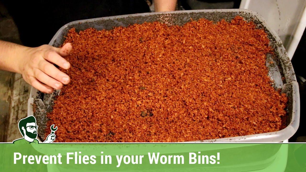 Preventing Fruit Flies In Your Worm Bins Youtube