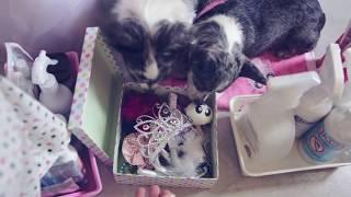 Хранение вещей собаки, шкаф Софи | НЕДЕЛЯ ВЛОГОВ | ДЕНЬ 7 | Догмама Vlog