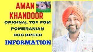 Original Toy Pom puppy Pomeranian(Culture Pom)pure Dog Breed Information,Knowledge In Hindi.Ludhiana