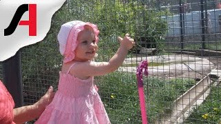 Роев ручей Красноярск. Зоопарк для детей видео. Белый медведь в зоопарке.(Недавно бабушка, дедушка и тетя сводили Сашулю с зоопарк