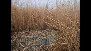 Рыбалка 12.03.2015 в камышах Ивановка. Плотва идет часть 1