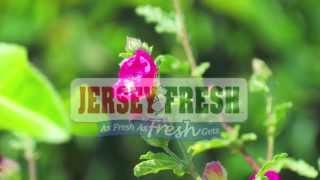 Jersey Fresh Tour