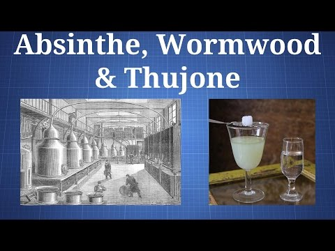 Absinthe, Thujone, & Artemisia absinthium: What You Need To Know