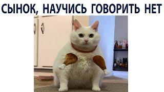 Приколы и Мемы с Котами 2021 года. МЕМЧИКИ про Котов #shorts