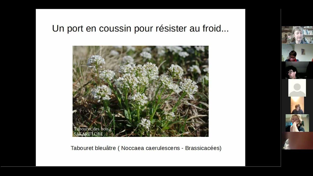 """Webconférence """"Vive le printemps et ses premières fleurs sauvages !""""  1/3 -Des fleurs dans la neige"""
