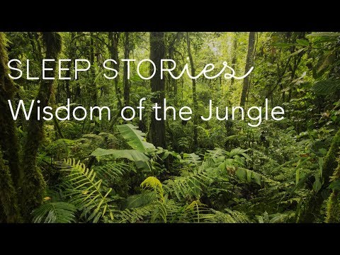Calm Sleep Stories | Widsom of the Jungle | Trailer