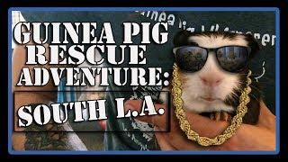 Guinea Pig Rescue Adventure: South L.A. Animal Shelter