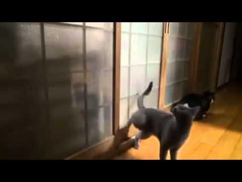 multicrop 'keep off' dog & cat repellent