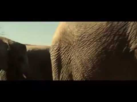 Download El elefante sexual XD