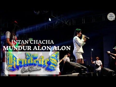 Mundur Alon Alon Intan Chacha New Kendedes Live Bali