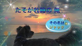 生き物と自然が大好き!  沖縄からYouTube動画投稿しています! バス停...