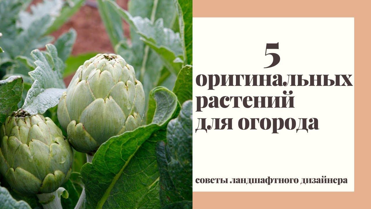 5 растений которые должны быть в вашем декоративном огороде!