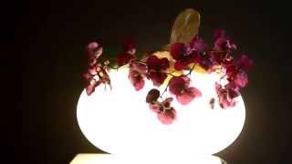 Настольный светильник PRIDE AT6118-3L(, 2015-10-06T21:40:19.000Z)