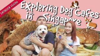 We Visited Dog Cafes in SG   Eatbook Food Guides   EP 14