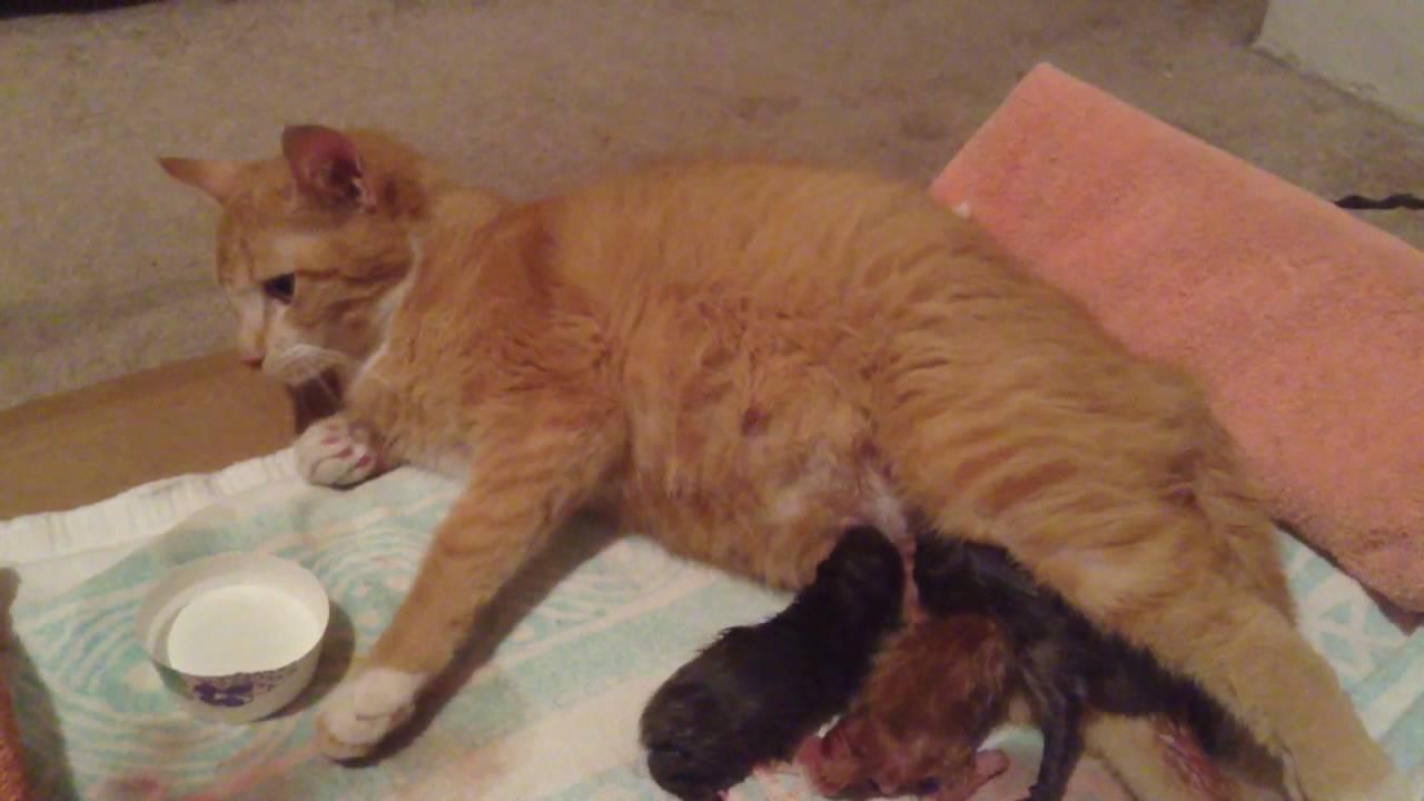 Cat having kittens 4
