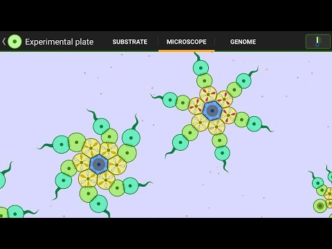 Sea Stars (3 To 8 Arms ) + Fractal-Fish II - By C4pung & Bwisialo
