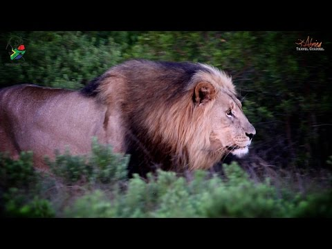 Tim Brown Tours: Durban Tours and Safaris in Your Budget - Africa Travel Channel