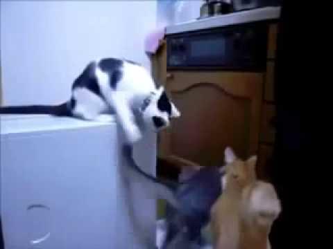 Видео про животных смотреть онлайн
