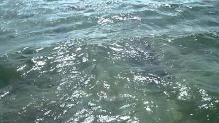 Andros Dolphins