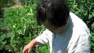 無農薬で野菜を育てるおばあちゃんの害虫駆除の知恵 thumbnail