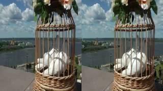 Цыганская свадьба в 3Д  Герман и Катя  23 07 2016 Нижний Новгород