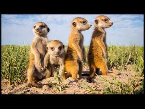 African Wildlife AIB Part 34