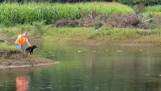 American Water Spaniel Club Video