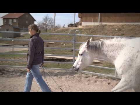Pferd als Coach, Führungskräftetraining