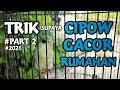 Merawat Burung Sirtu Gacor Di Rumah Sadulur Cipoh Karawang  Mp3 - Mp4 Download