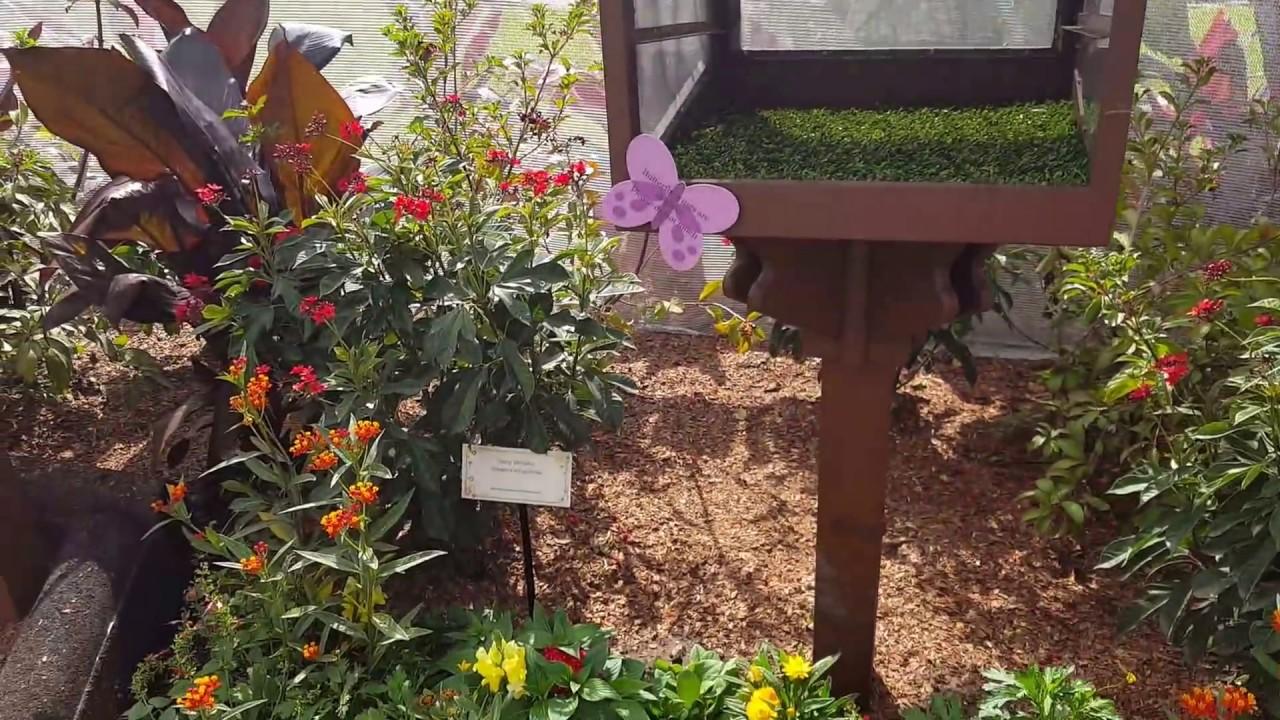 2017 Epcot Flower & Garden Festival Butterfly House - YouTube