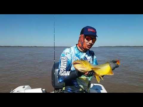 Pescaria em Esquina, Argentina - Dourado Bus